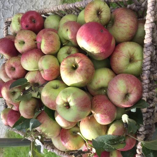 Southview Apples